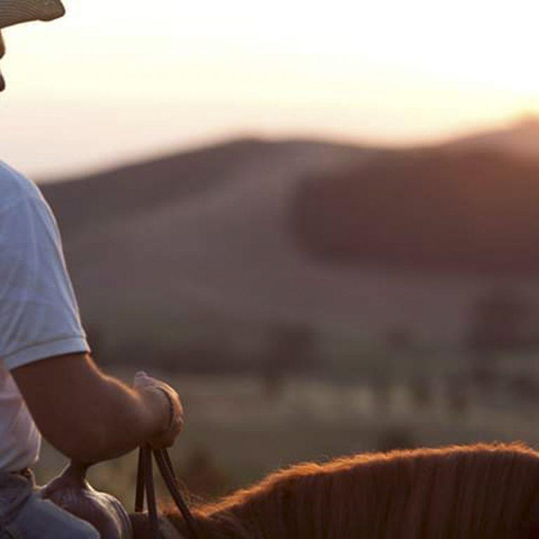 cavallo-montaione-05