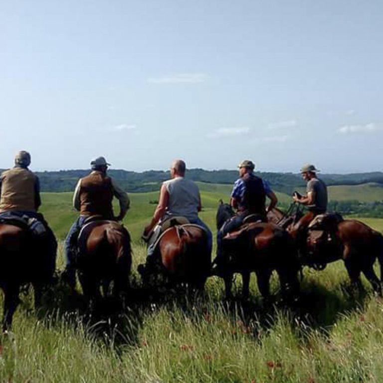 cavallo-montaione-10